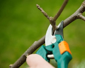 Pruning is a year round task