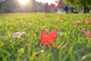 lawn-free-leaves