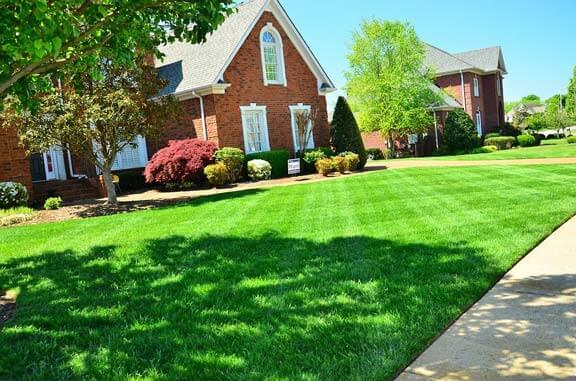 lawn-green