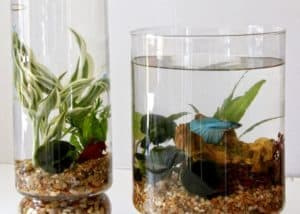 indoor-aquatic-gardening