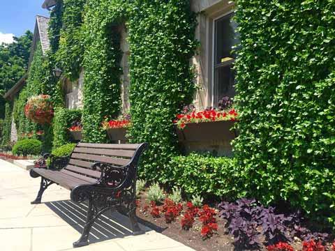 wall-gardening
