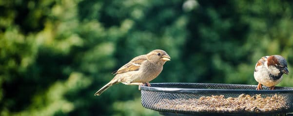 Attract Birds into Your Garden
