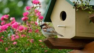 bird birdhouse