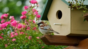 bird birdhouse