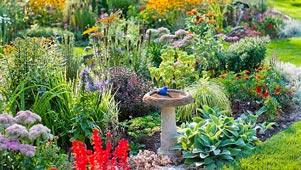 bird friendly garden