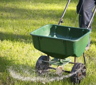 Best Time of Day to Fertilize Lawn