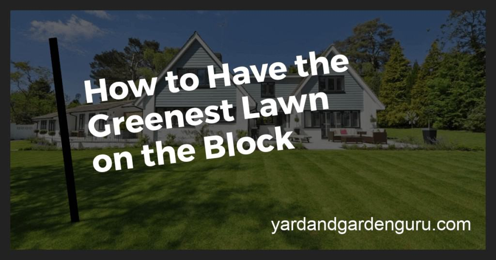 how to make your lawn green