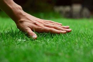 lawn make greener