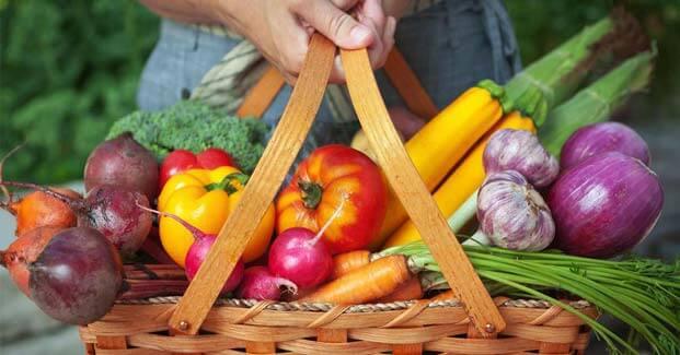 Harvest for vegetable garden