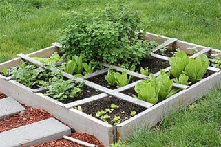 Ideal Size for Beginners Vegetable Garden