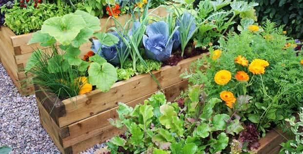 Planting My Vegetable Garden