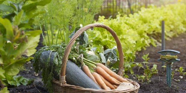 Plants to Grow in Your Vegetable Garden