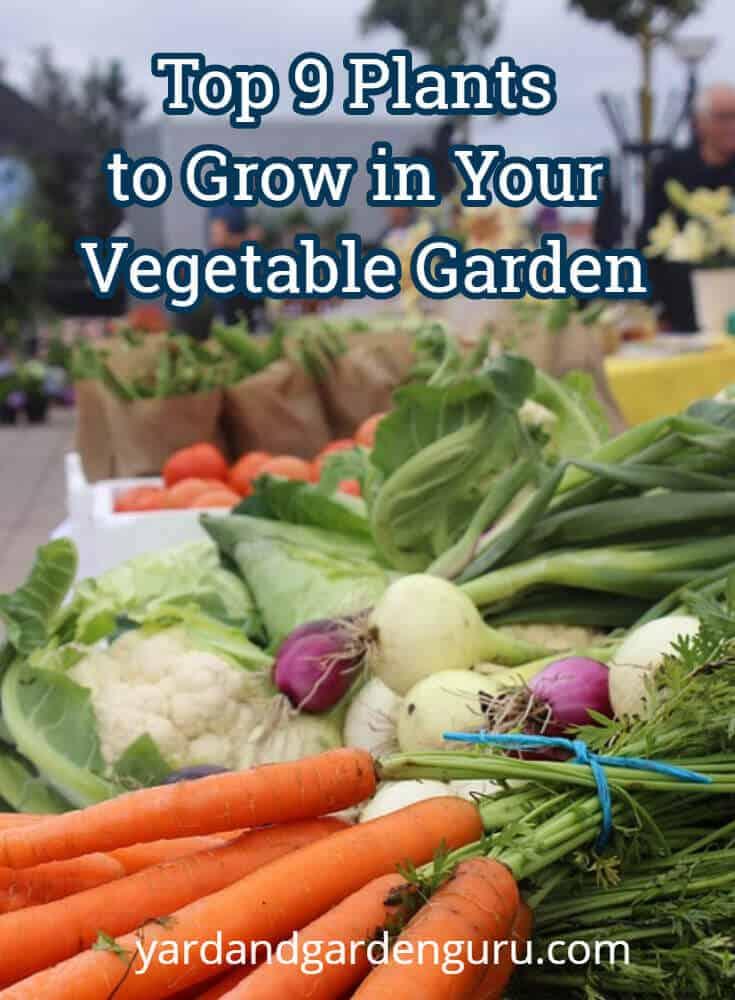 Top 9 Plants to Grow in Your Vegetable Garden