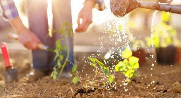 Where to Plant Your Vegetable Garden