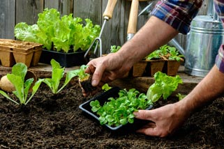 soil for Raised Bed Gardening