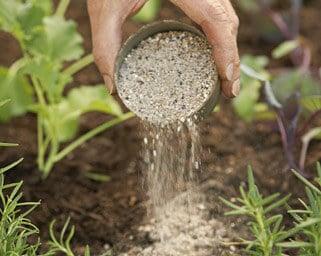 vegetable garden care