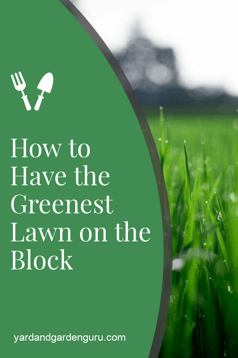 How to Have the Greenest Lawn on the Block