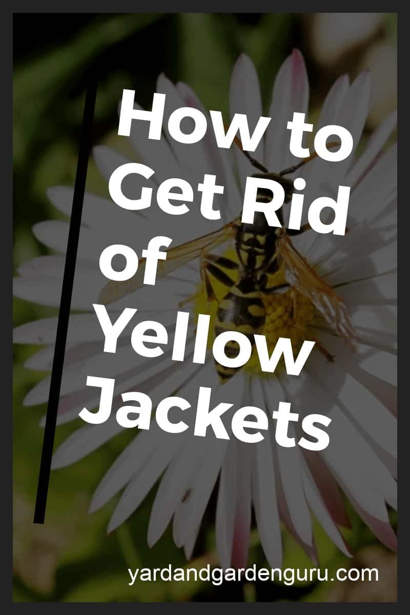 how to keep yellow jackets away