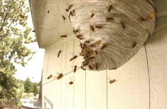 ways of yellow jacket nest removal