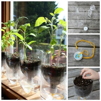 Guide in Self-Watering Planter