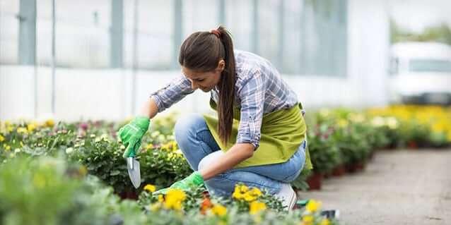starting a garden blog