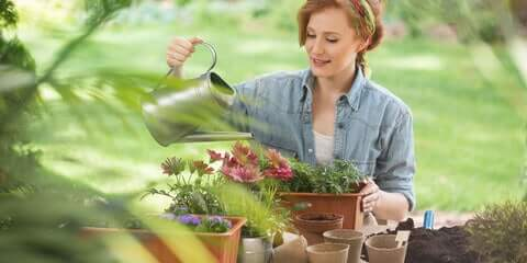 Best Time to Water Plants