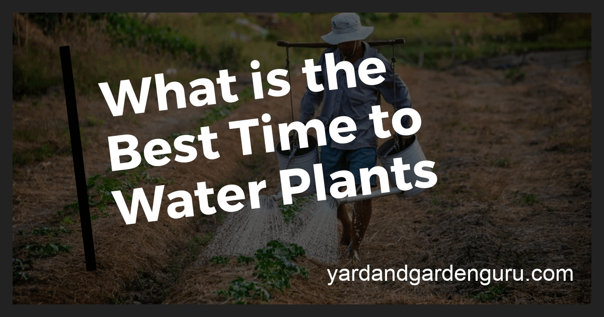 What is the Best Time to Water Plants