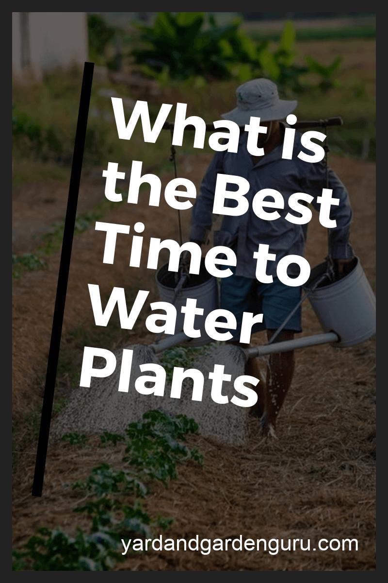 best time to water garden