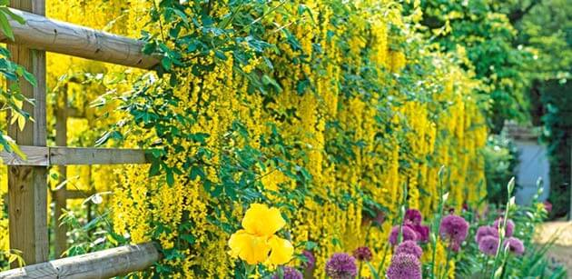 climbing plants for your house