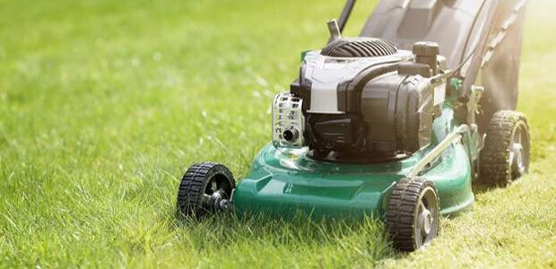 mowing of your lawn to get rid of chickweed