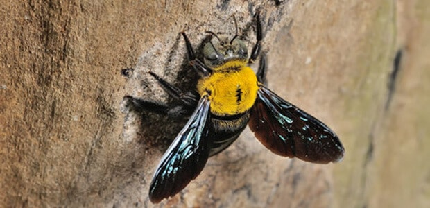 Get Rid of Carpenter Bees