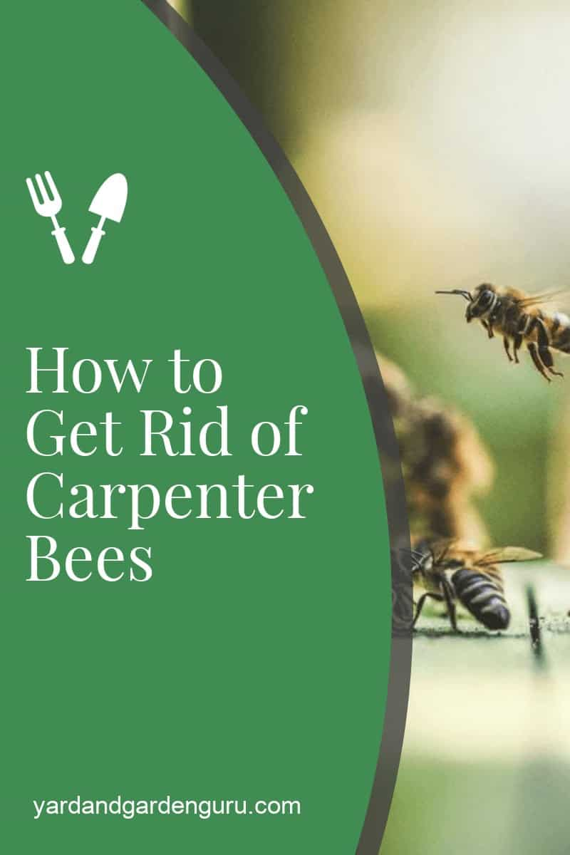 Getting Rid of Carpenter Bees The Right Way