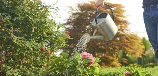 Watering and Feeding of gardens
