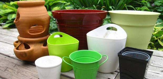 right containers and soils