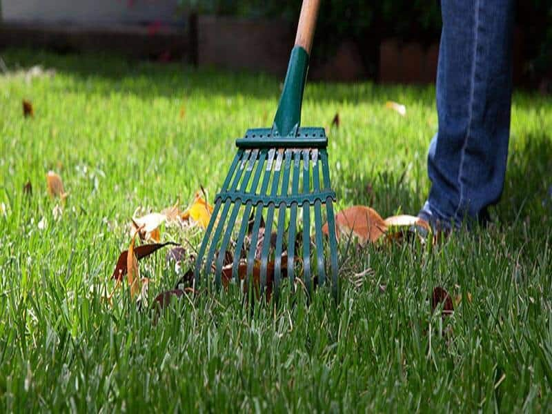 Tips in Spring Lawn Care