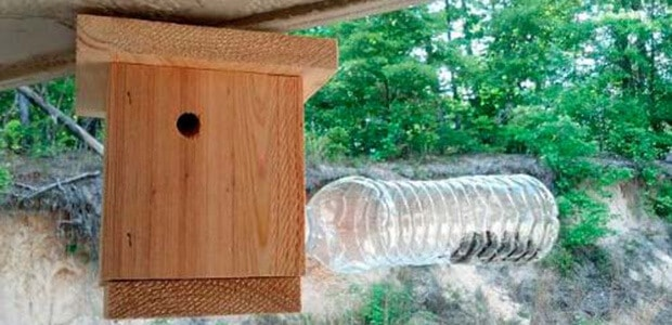 choosing the right bee trap