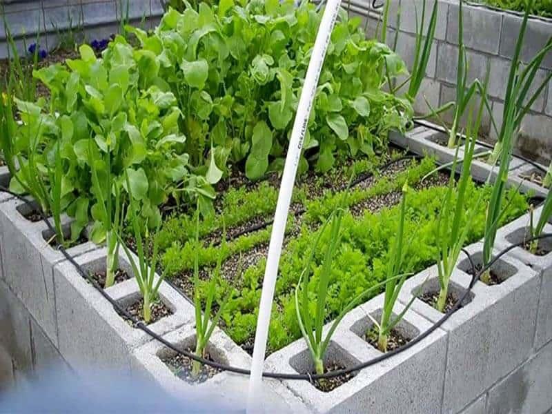 cylinder block for vegetable garden