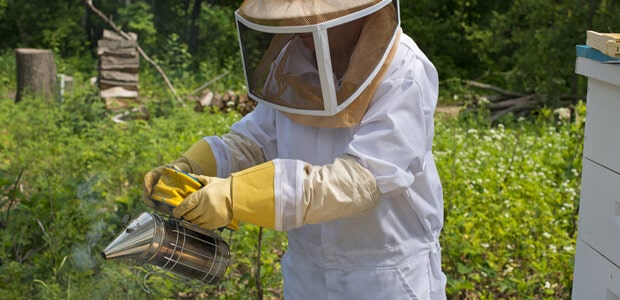 protective clothing for killing bees