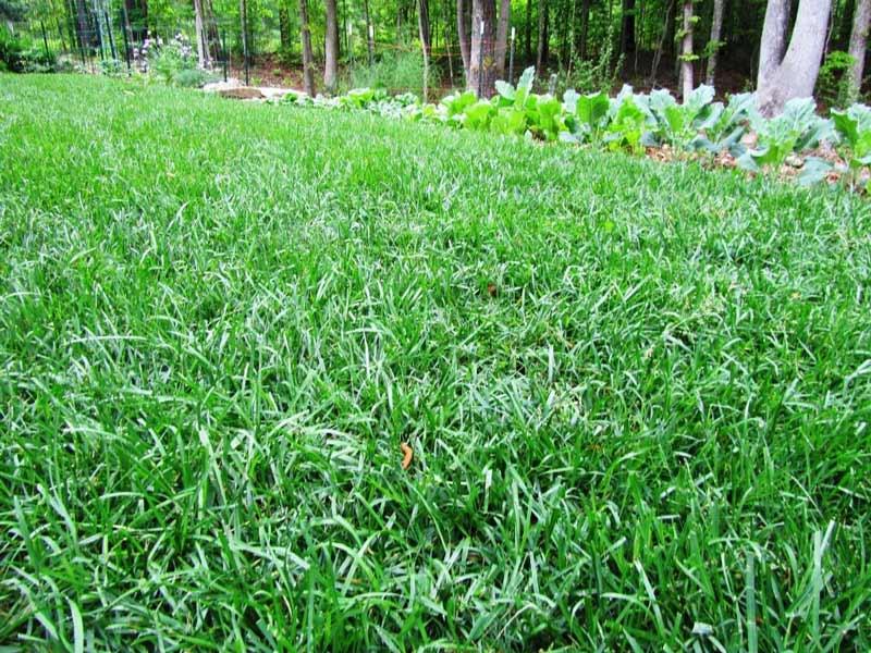 tropical season grass