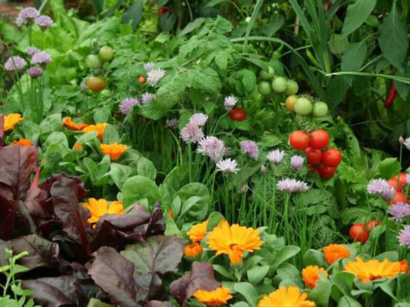 Companion Planting for vegetable garden layouts