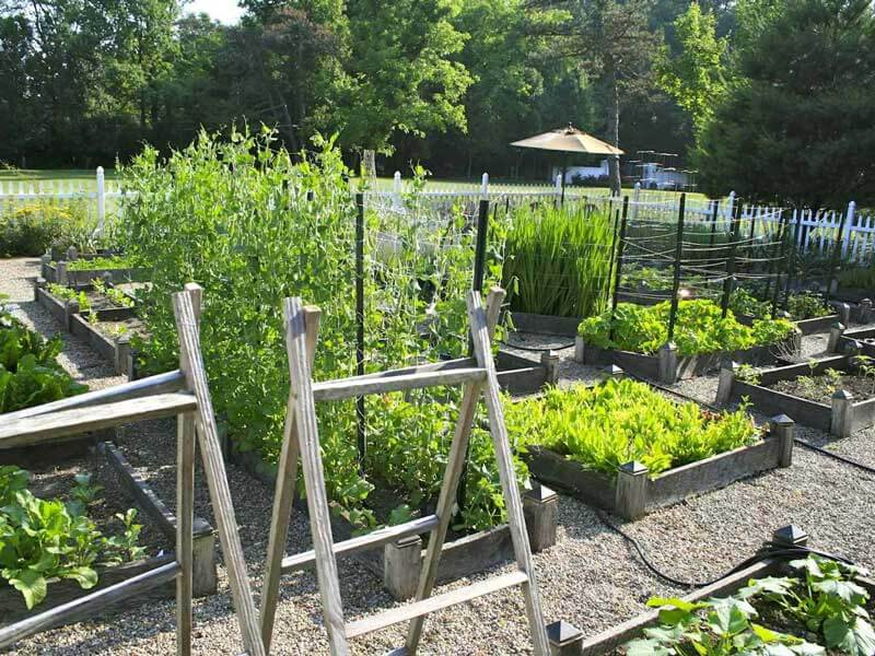 Practical Garden Layout for your vegetable garden