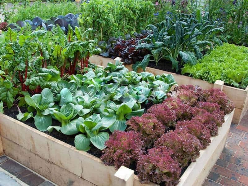 raised garden is a rectangular frame layout