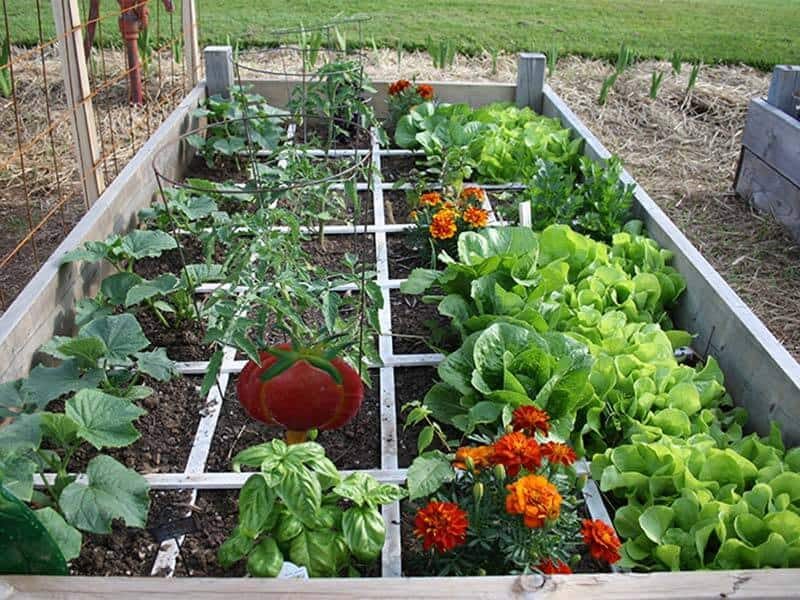 square foot gardening for small areas