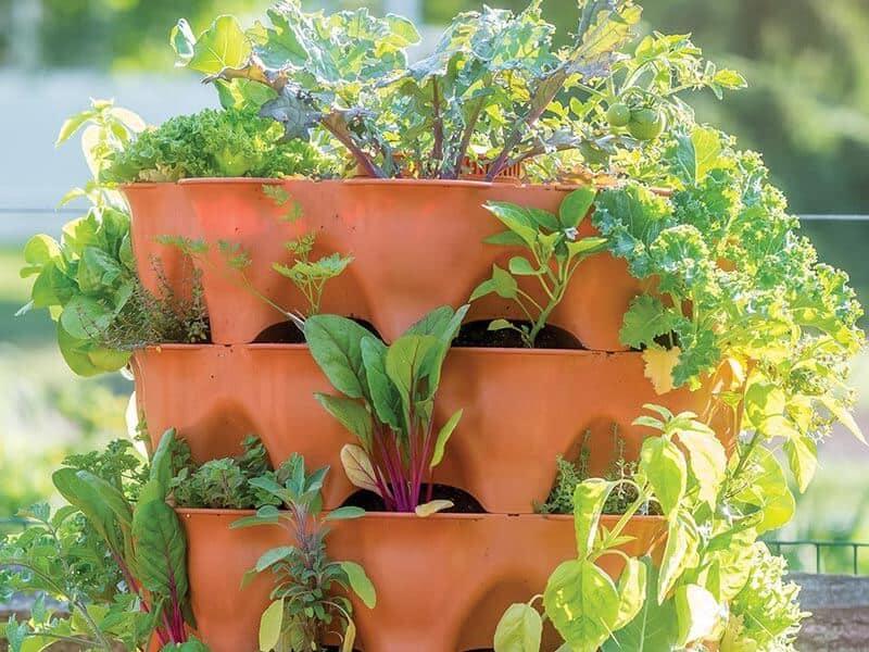 looking for best garden towers