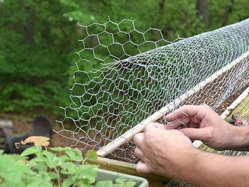Fencing garden to repel Squirrels