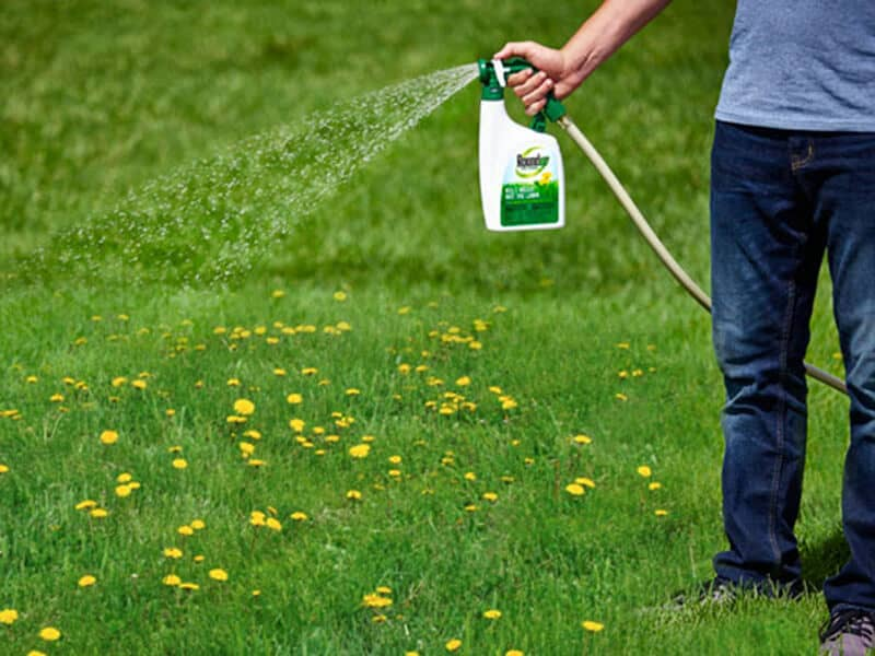 vinegar as a weed killer