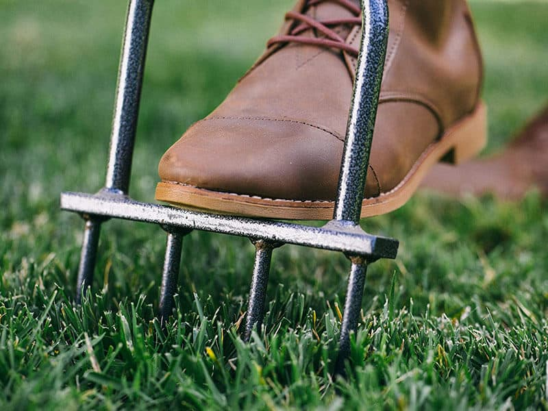 Lawn Aeration for Healthy Lawn