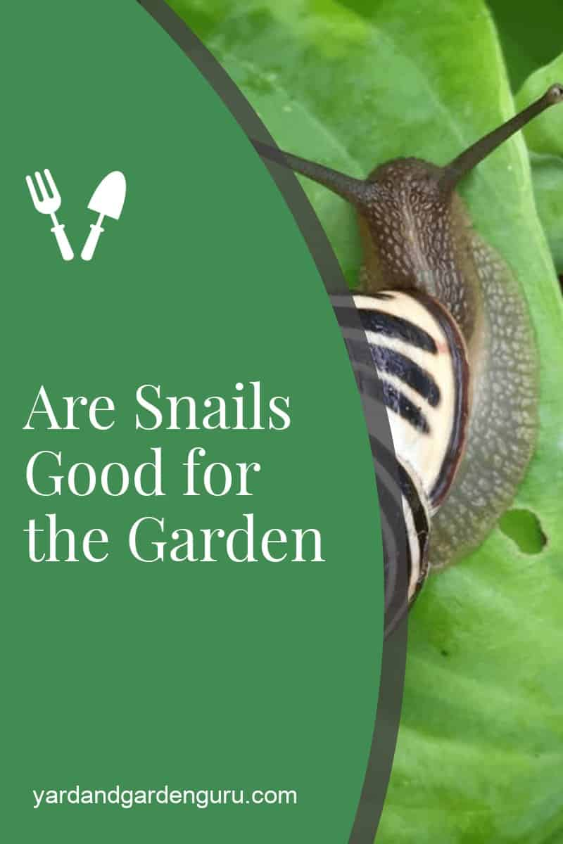 Are Snails Good for the Garden