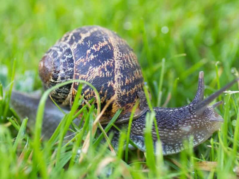 Garden snails good for your garden