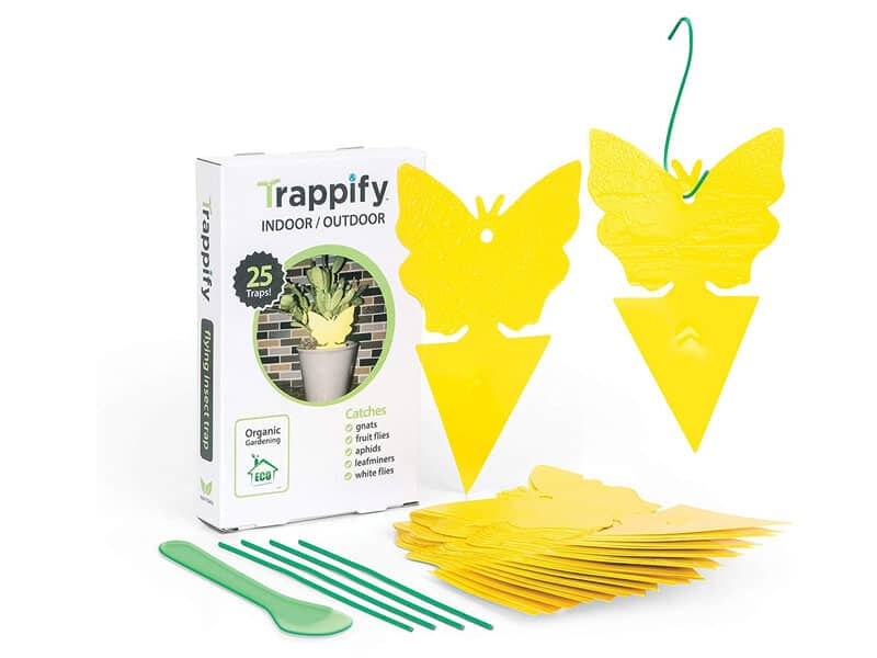 Trappify Sticky Fruit Fly and Gnat Trap Yellow Sticky Bug Traps for IndoorOutdoor Use - Insect Catcher for White Flies, Mosquitos, Fungus Gnats, Flying